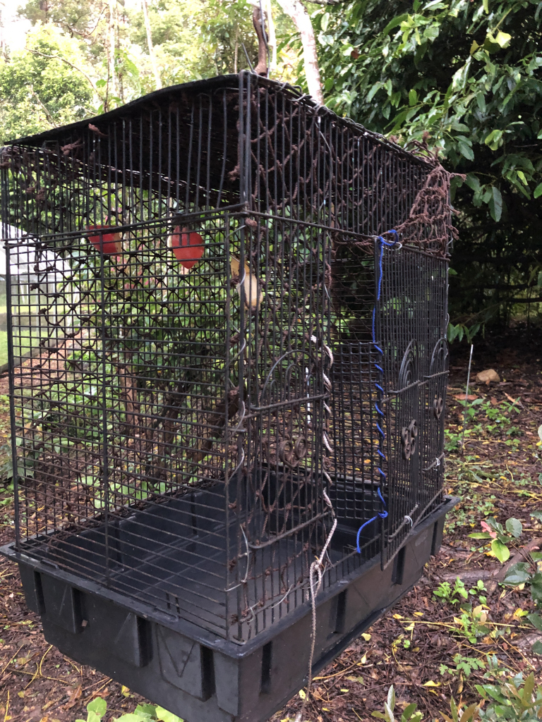 soft release cage for tube-nosed orphans