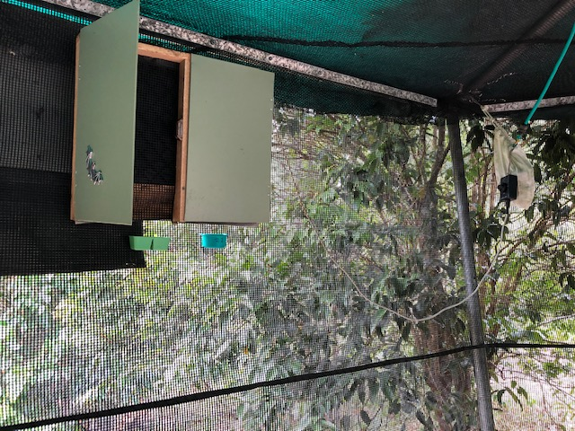 Bat box used by various species including the yellow-bellied sheath tail.